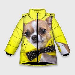 Куртка зимняя для девочки Чихуахуа с бабочкой цвета 3D-черный — фото 1
