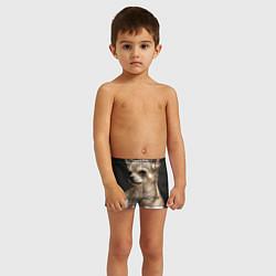 Плавки для мальчика Малышка чихуахуа цвета 3D — фото 2
