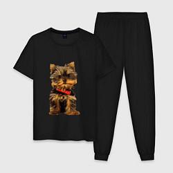 Пижама хлопковая мужская Маленький Йорк цвета черный — фото 1