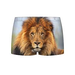 Трусы-боксеры мужские Красавец лев цвета 3D-принт — фото 1