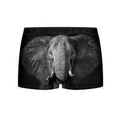Трусы-боксеры мужские Взгляд слона цвета 3D-принт — фото 1